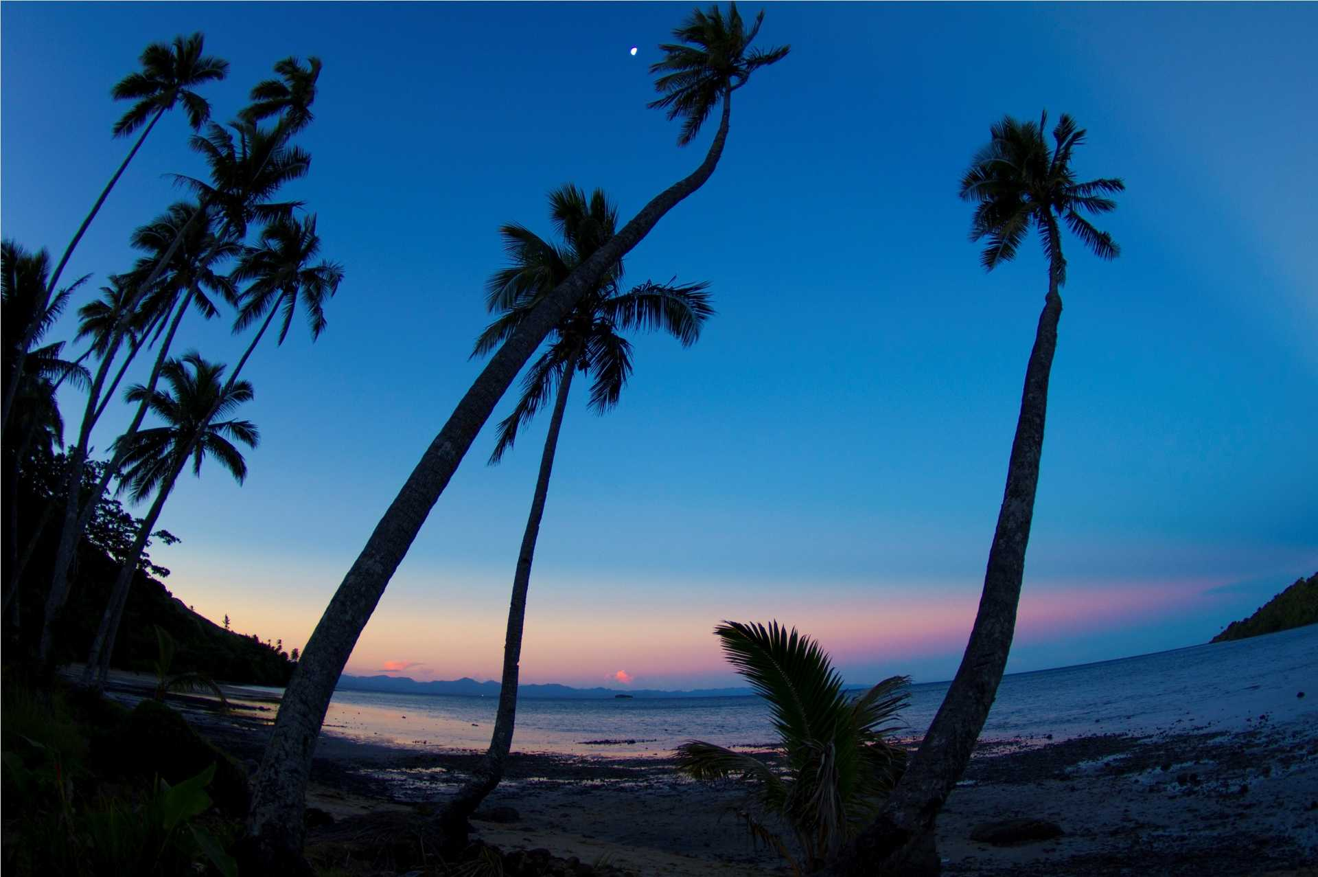Fiji palm trees at sunset - beautiful blues and pinks